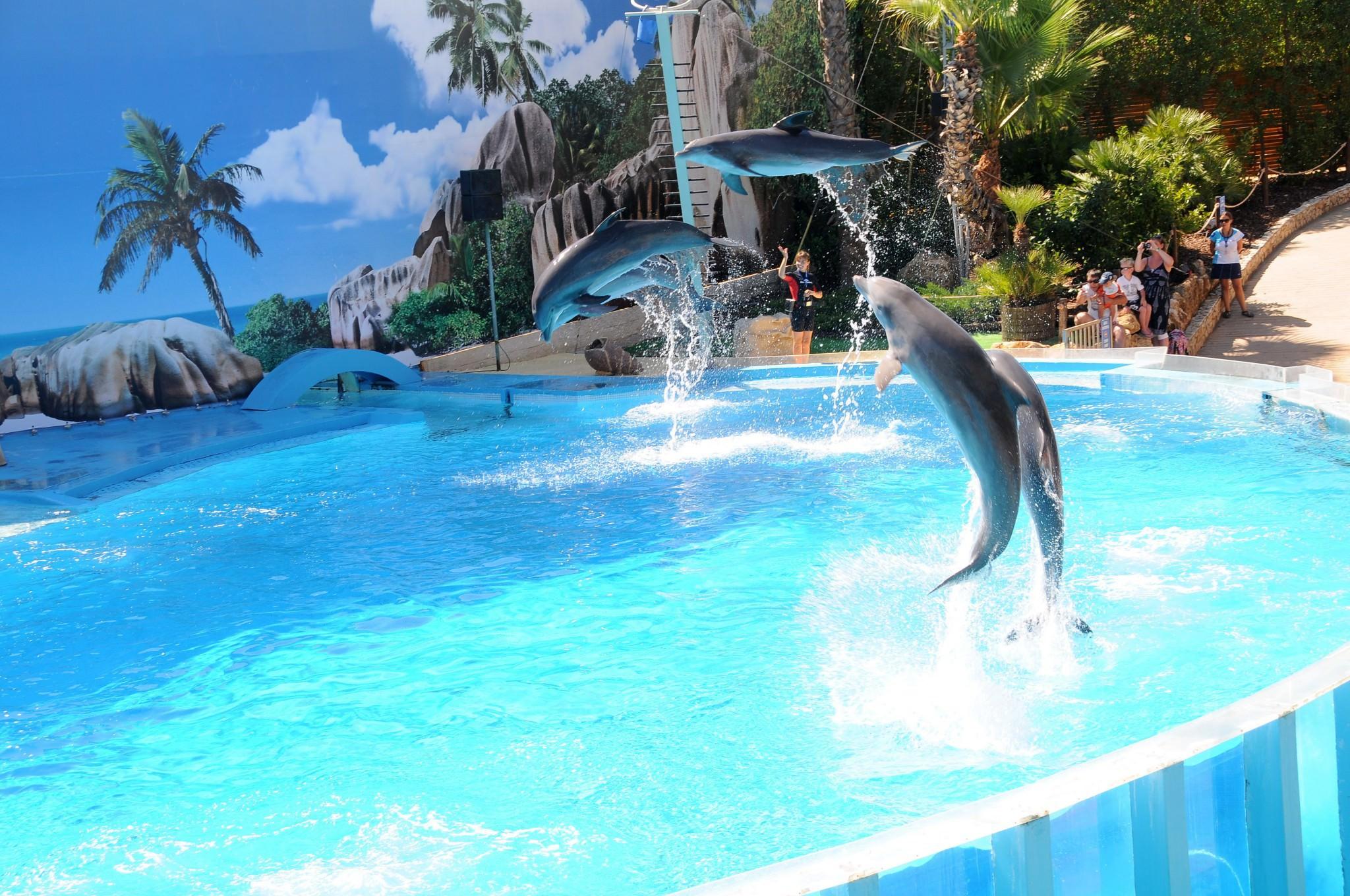 Long Term Car Rental >> Zoomarine Aquatic Theme Park ・ Praia da Luz Holidays